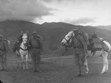 Turkish Soldiers with Mules Carrying Machine Guns