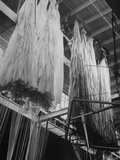 View of Worker Hanging Up Newly-Completed Parachutes to Prevent Silk from Molding