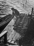 Duck Hunter Frank Freudenberg Loading Decoys for Ducks at Dawn