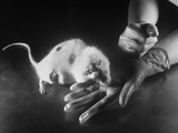 Rats Suffering from Radiation Sickness Being Experimented on for Research