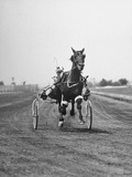 Harness Racing at Roosevelt Raceway