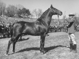 A View of the Army Remount Service&#39;s Parade of Horses