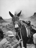 Soldier Posing Beside His Mule on Mountain Terrain