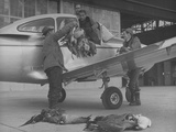 Actor Robert Ryan Watching as Lex Barker Lifts Geese onto Airplane
