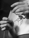 A Doctor Extracting Venom from a Striped Tailed Scorpion