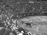 A Matador and a Bull at a Bullfight While the Crowd Watches