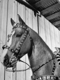 Close-Up of Palomino Horse