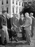 "President Harry S Truman Holding Bull ""Alabam"" by Rope"