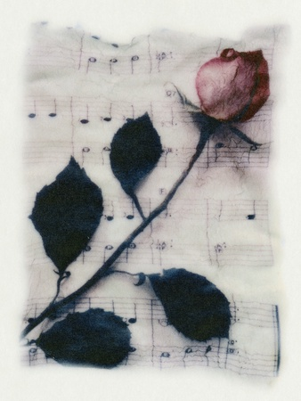 Rose and Music Stretched Canvas Print