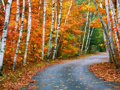 Autumn Trees Lining Country Road Stretched Canvas Print