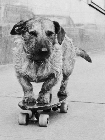 Dog Riding Skateboard Stretched Canvas Print