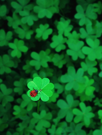 Ladybug on Four Leaf Clover Stretched Canvas Print