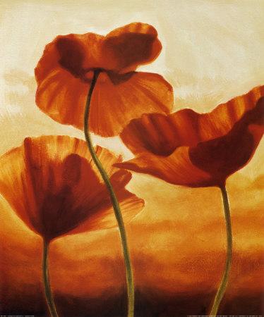 http://cache2.artprintimages.com/p/LRG/14/1461/FSFQ000Z/art-print/andrea-kahn-poppies-in-sunlight-ii.jpg