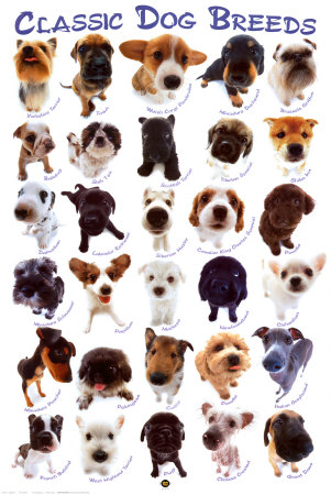 dogs breed names. Dog Breeds Poster at