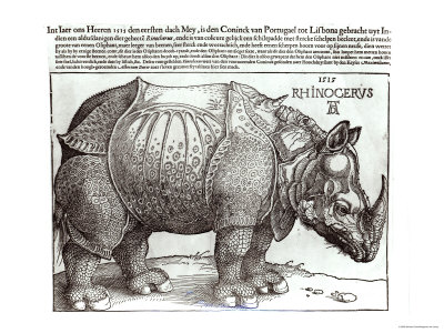 Rhinoceros, Print Given to Maximilian I by the King of Lisbon, 1515 Stretched Canvas Print