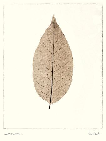 Chinese Magnolia Print