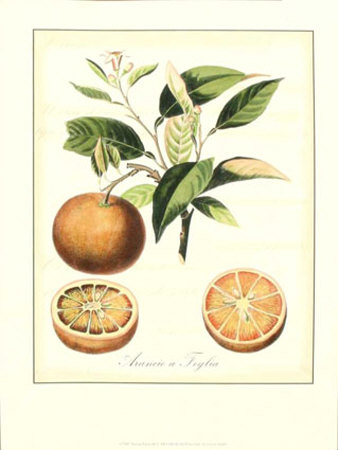 Tuscan Fruits III Print