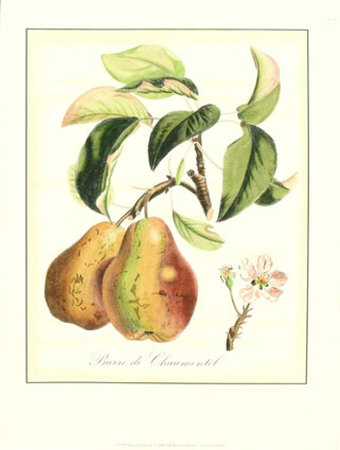 Tuscan Fruits IV Print