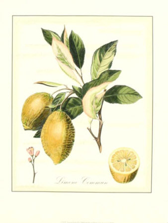 Tuscan Fruits II Print