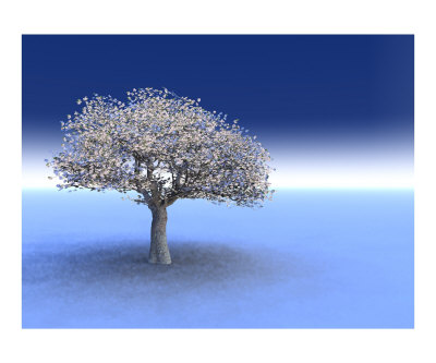 cherry tree blossom art. Cherry Tree Blossoming in a