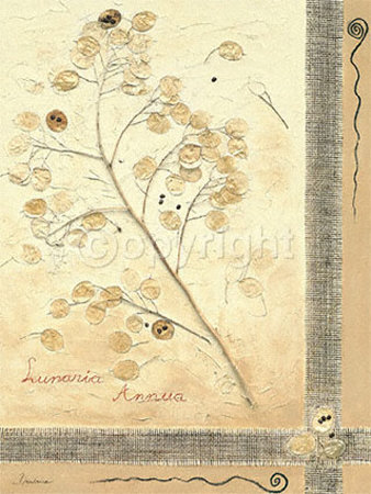 Lunaria Annua II Print