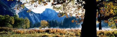 Half Dome, Yosemite National Park, California, USA Stretched Canvas Print