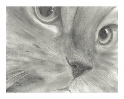 Pretty Kitty Cat Face Drawing in Black and White Giclee Print