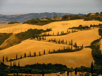 Golfen Tuscan Landscape Near La Foce, Tuscany, Italy Stretched Canvas Print
