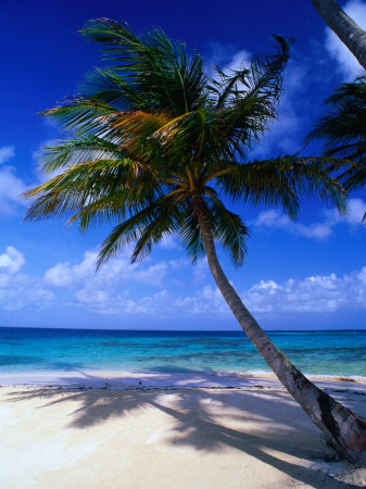 A Palm Tree Bends to the Caribbean Sea on a Key in the San Blas Islands, San Blas, Panama Stretched Canvas Print