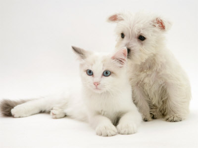 puppy and kittens pictures. Puppy Sniffing Blue-Eyed