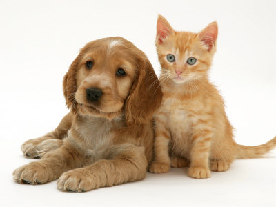 pics of kittens and puppies. Puppy with Ginger Kitten