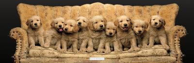 """Golden Pup Line-Up"" Print"
