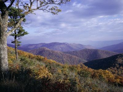Area Near Loft Mountain, Shenandoah National Park, Virginia, USA Stretched Canvas Print