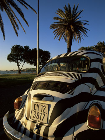 Back of a Beetle Car Painted in Zebra Stripes, Cape Town, South Africa, Africa Stretched Canvas Print