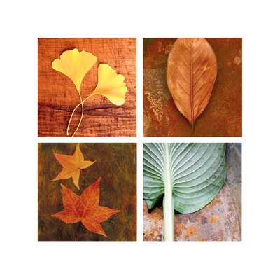 Leaves Arrangement Four Patch Stretched Canvas Print