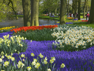 Tulips in Keukenhof Gardens, Amsterdam, Netherlands Stretched Canvas Print