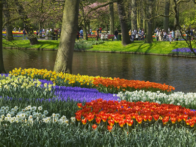 Tulips and Daffodils in Bloom in Keukenhof Gardens, Amsterdam, Netherlands Stretched Canvas Print