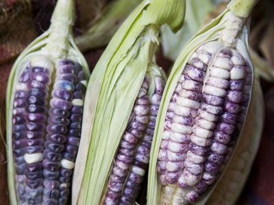 Purple Corn Displayed in Market, Cuzco, Peru Stretched Canvas Print