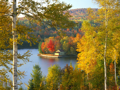 Summer Home Surrounded by Fall Colors, Wyman Lake, Maine, USA Stretched Canvas Print
