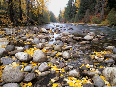 Nason Creek with Autumn Leaves, Wenatchee National Forest, Washington, USA Stretched Canvas Print