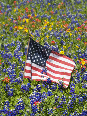American Flag in Field of Blue Bonnets, Paintbrush, Texas Hill Country, USA Stretched Canvas Print