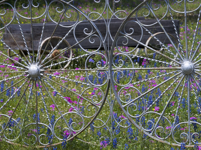 Wheel Gate and Fence with Blue Bonnets, Indian Paint Brush and Phlox, Near Devine, Texas, USA Stretched Canvas Print