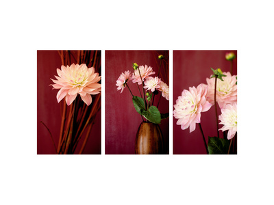 Pink Dahlias III Stretched Canvas Print