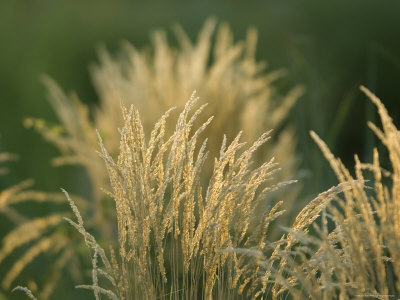 Grass at the Sedgwick County Zoo, Kansas Photographic Print. zoom. view in room