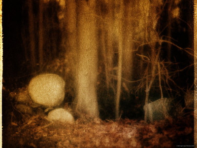 Ghostly Forest Landscape Stretched Canvas Print