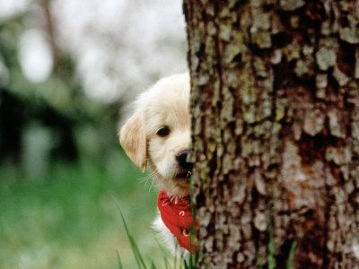 cão timido