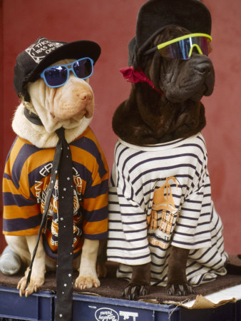 bill-melton-pair-of-dogs-dressed-in-clot