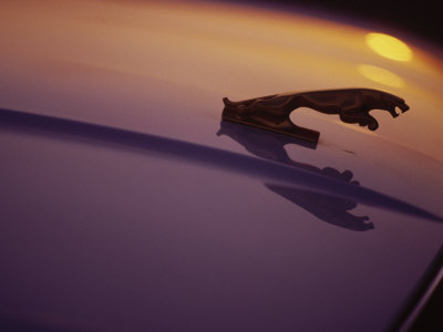 Hood Ornament of Jaguar with Light Reflection Stretched Canvas Print