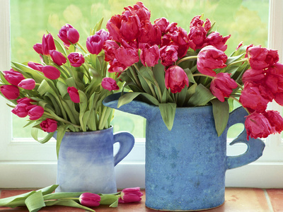 Pink Parrot Tulipa in Blue Vases with Handles, February Stretched Canvas Print