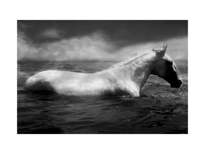White Horse Swimming Stretched Canvas Print